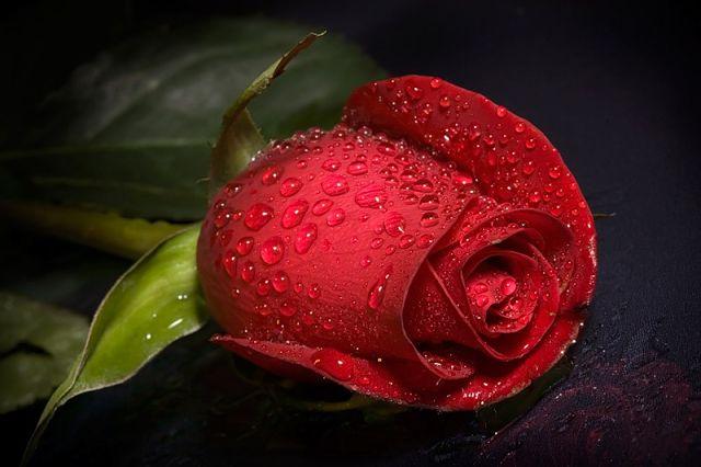 розы030