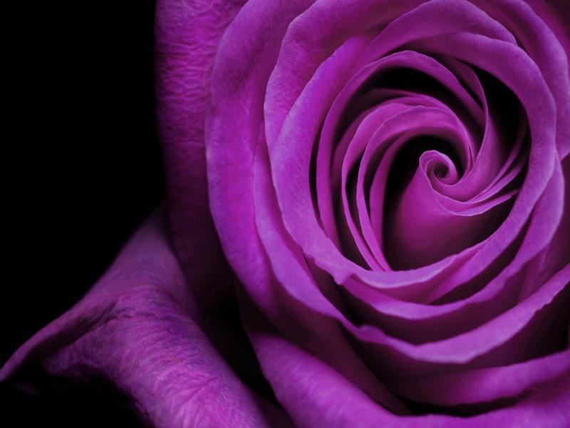 розы673